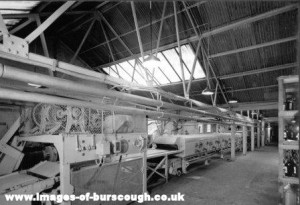 Swiss Roll Plant 02